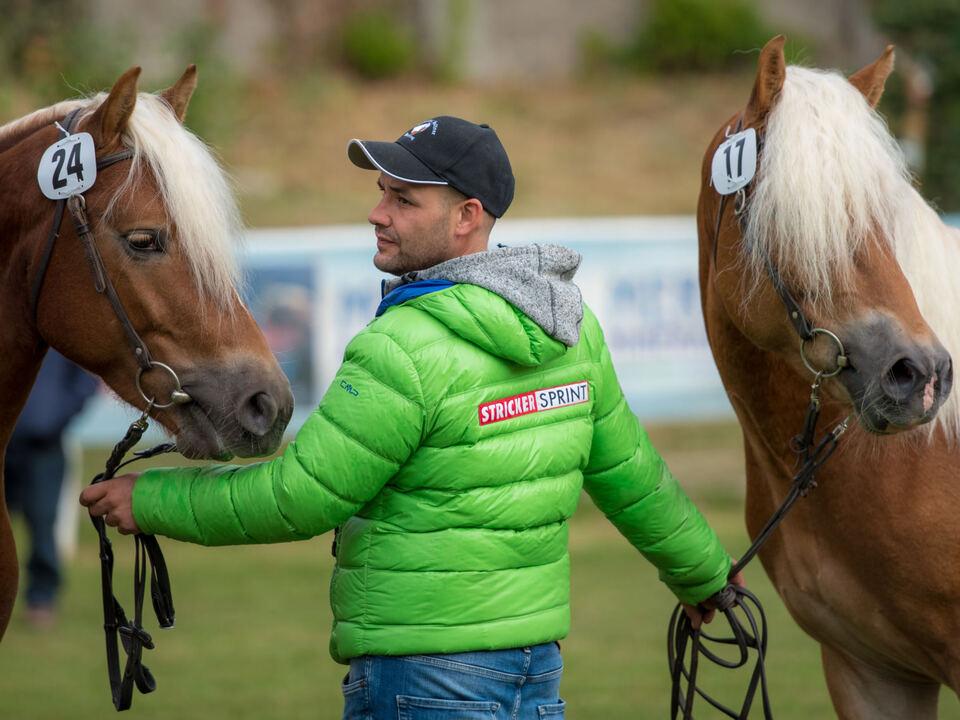 Südtiroler Haflinger Pferdezuchtverband