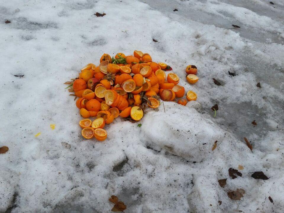 Müll ausgepresste Orangen
