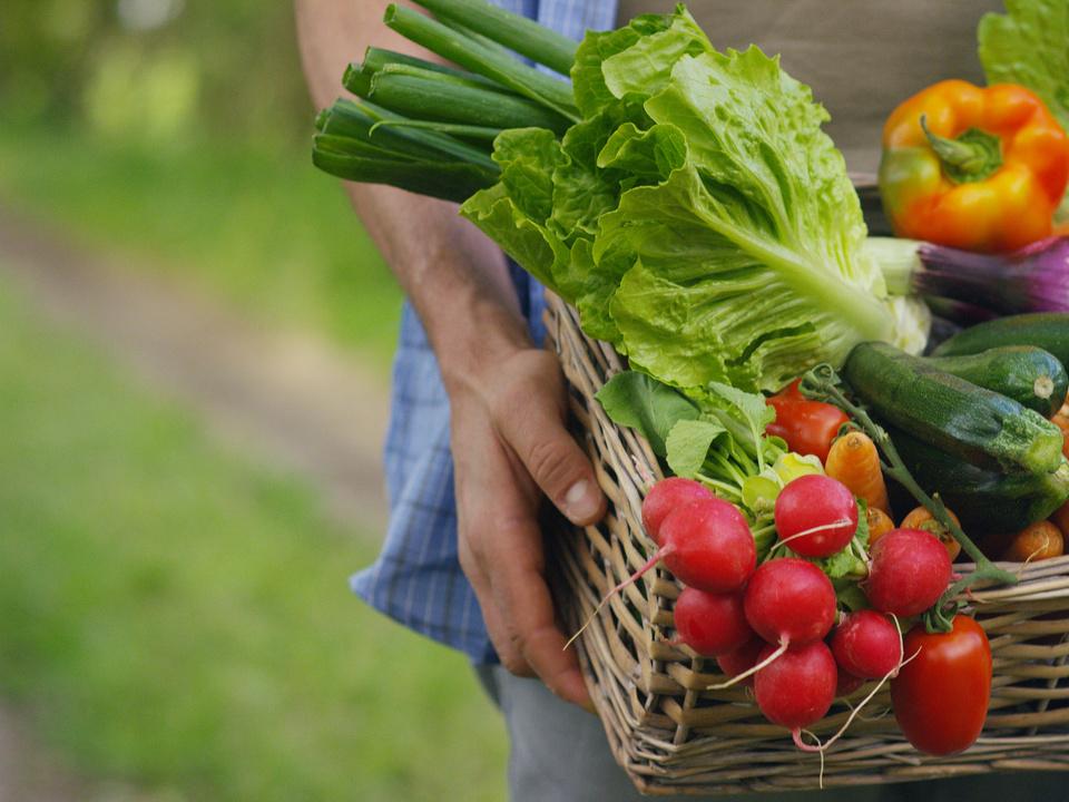 Gemüse bio radieschen