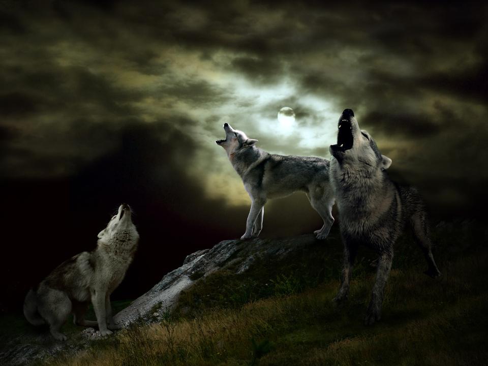 wolf symbol wolfsrudel angst horror