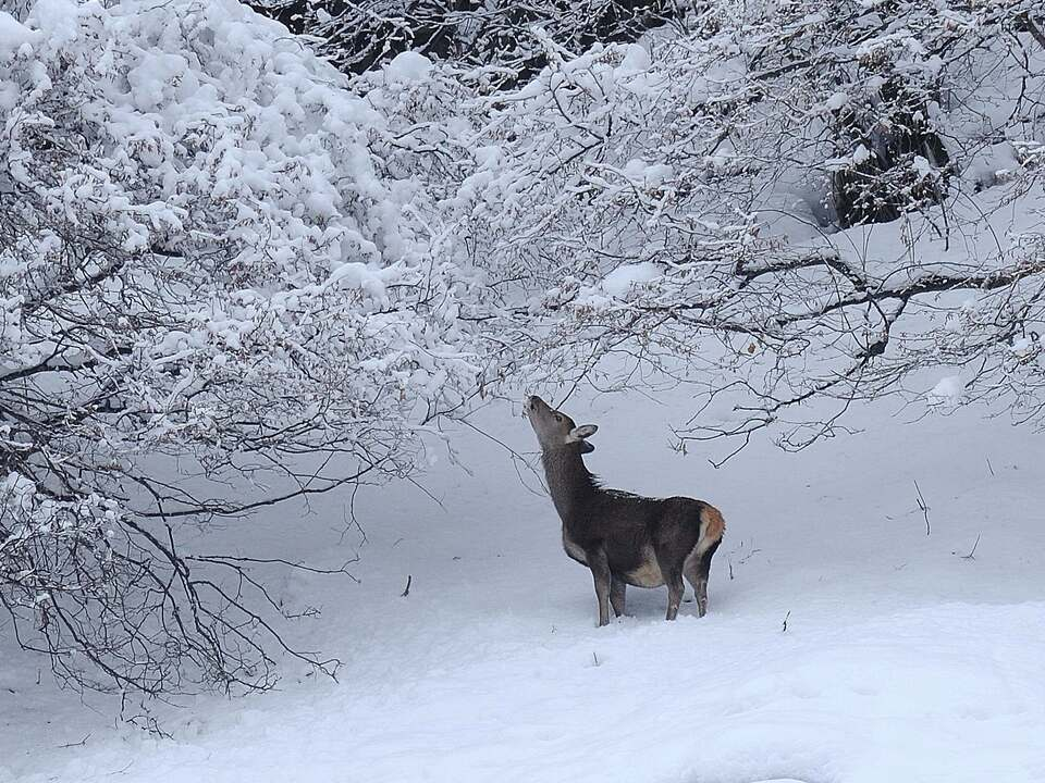 rotwild_winter_grassi-15