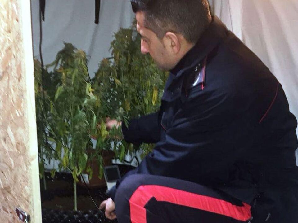 2-2-2018-notiziario-ore-18-00-rinv-piante-marijuana-prato-allo-stelvio-con-militare_