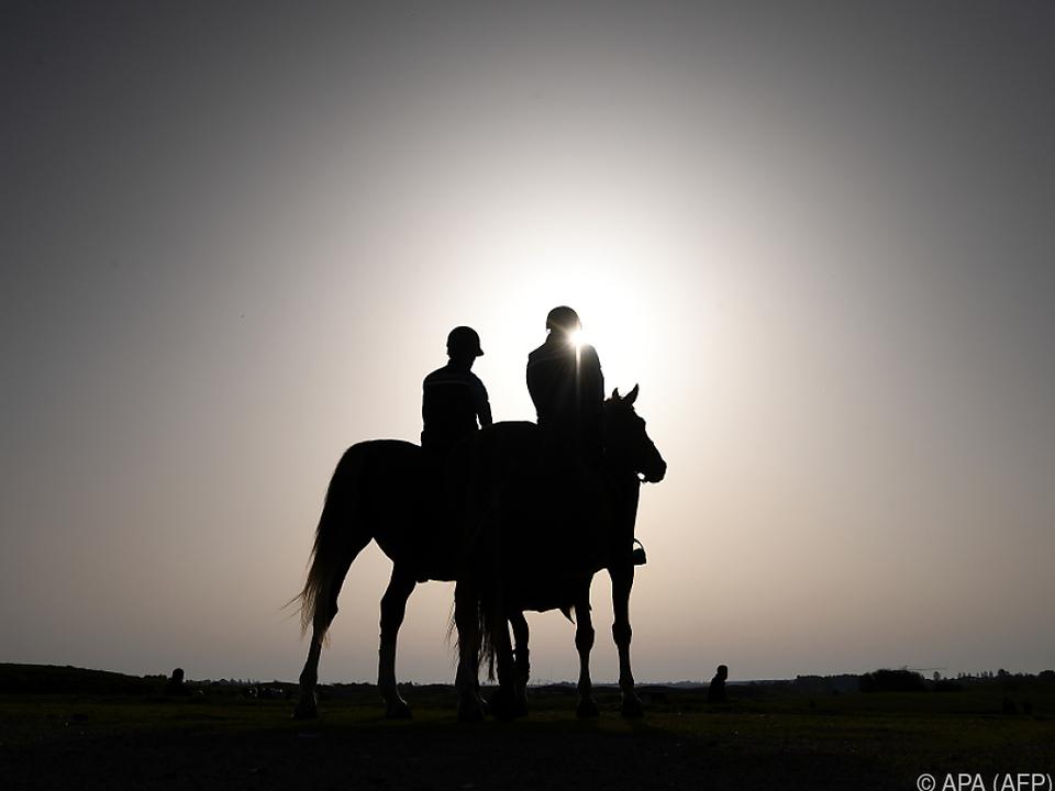 In vielen Ländern Normalität pferd  sym sonne urlaub