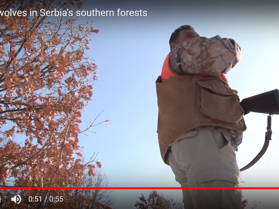 YouTube/AFP news agency-Hunting wolves in Serbia\'s southern forests