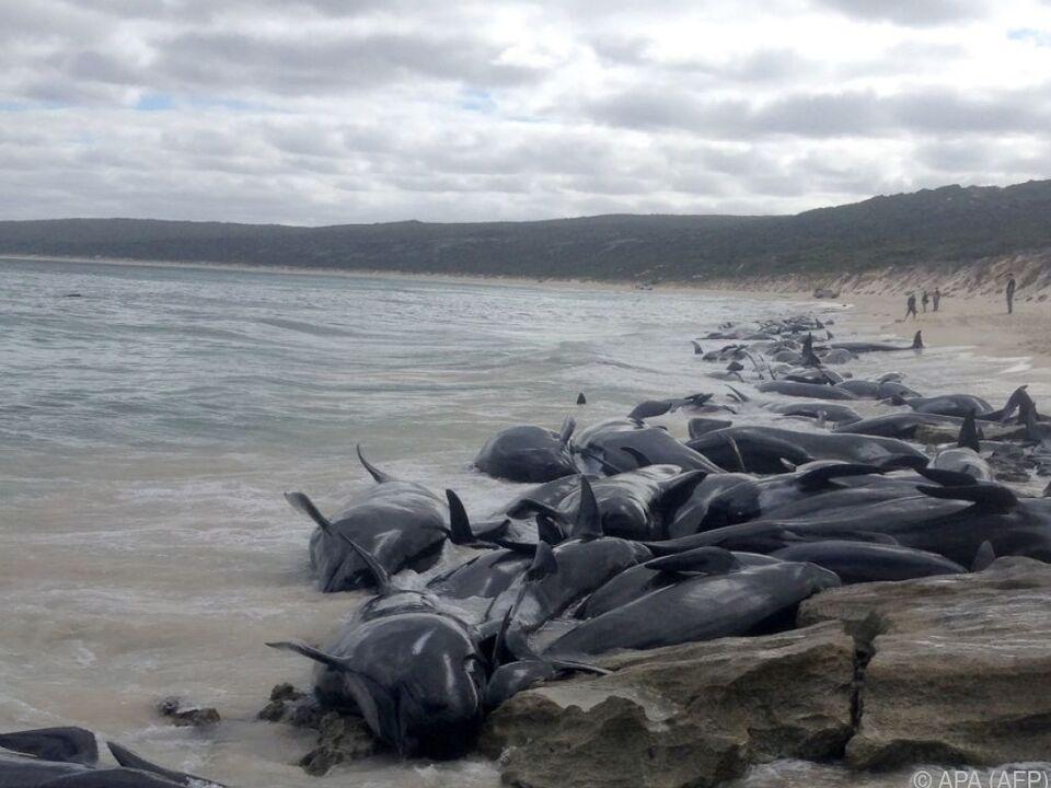 Die Tiere wurden Freitagfrüh von Fischern entdeckt