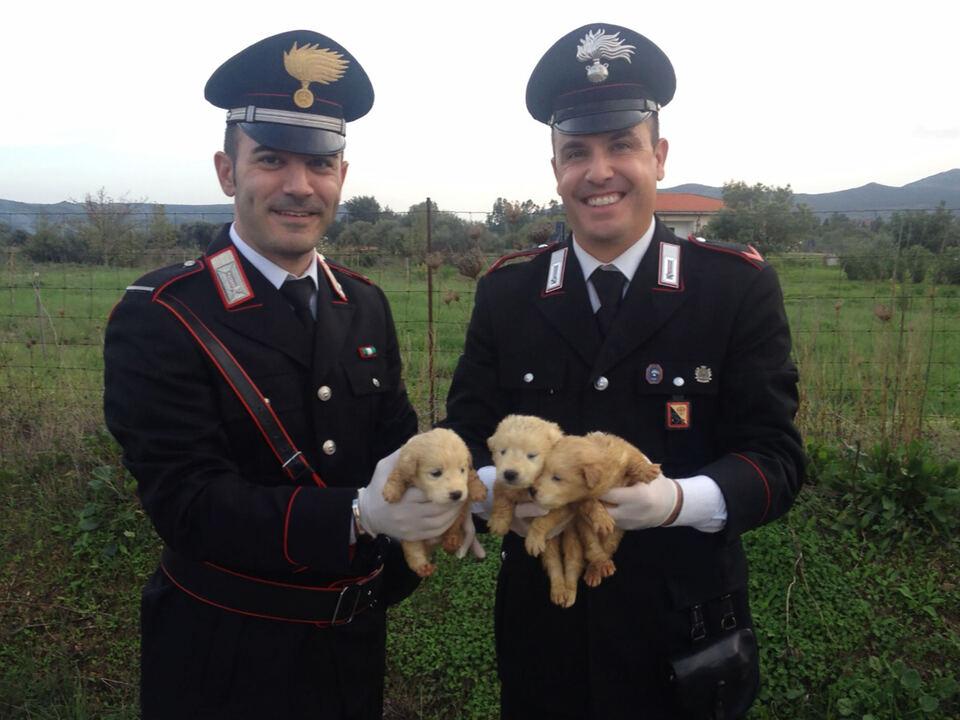 Carabinieri bekämpfen illegalen Jungtierhandel