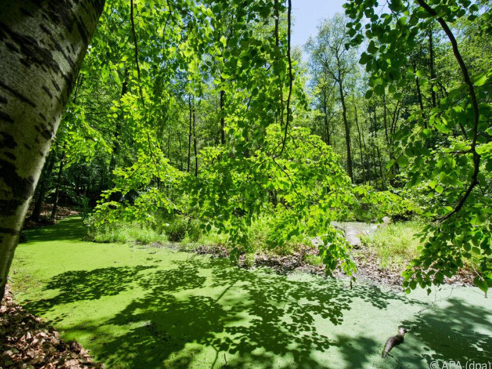 Wald im Ausmaß der 20-fachen Fläche Österreichs könnte verloren gehen