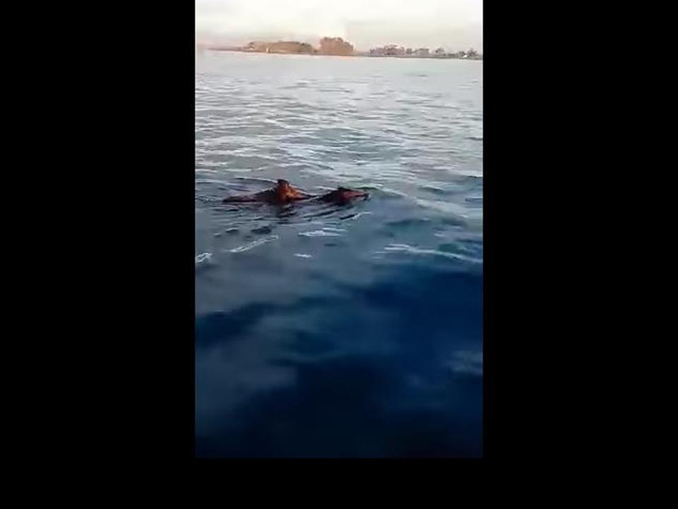 yt-wildschweine-meer