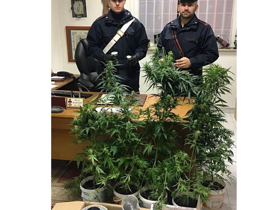 20180410-rinv-piante-marijuana-resia-all-adige-con-2-arresti
