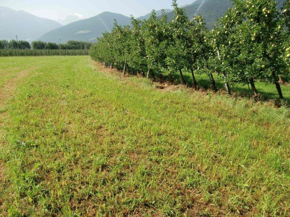 Obstwiese Apfelernte Landwirtschaft Obstanbau