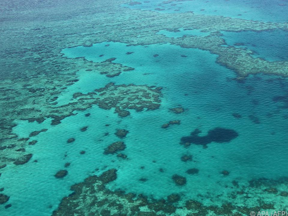 Das Great Barrier Reef ist auch ein Wirtschaftsfaktor
