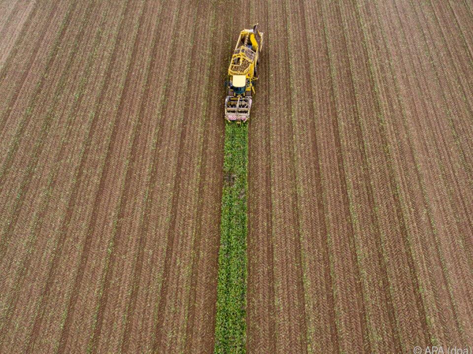 Die Ernte wird heuer bescheidener ausfallen als üblich