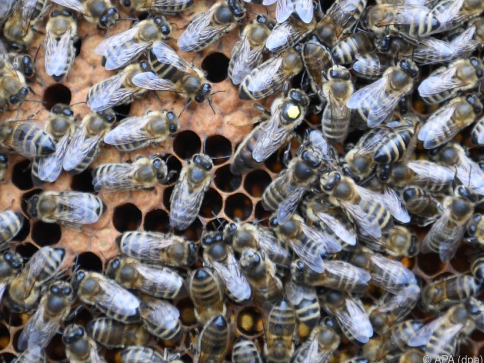 Leckerei für den Bären Bienen bienenstock