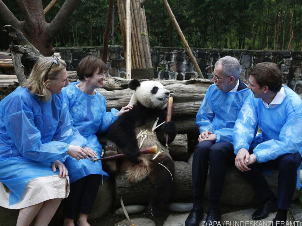 Österreichs Politiker fanden neue (Panda-)Freunde in China