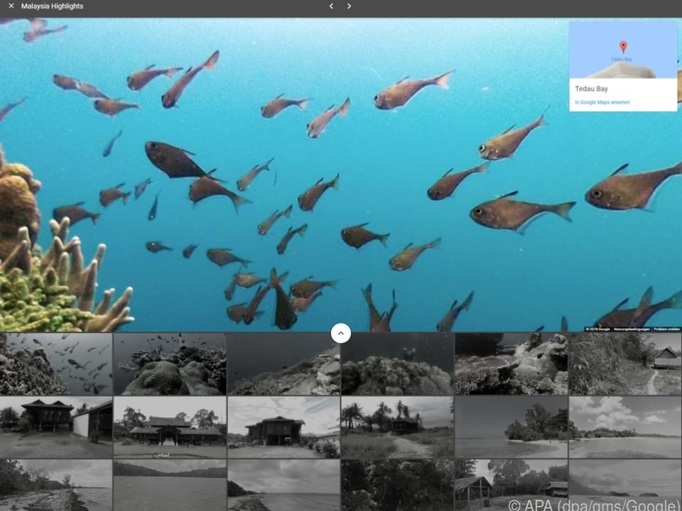 Unter Fischen schwimmen in Malaysia mit den StreetView-Panoramen