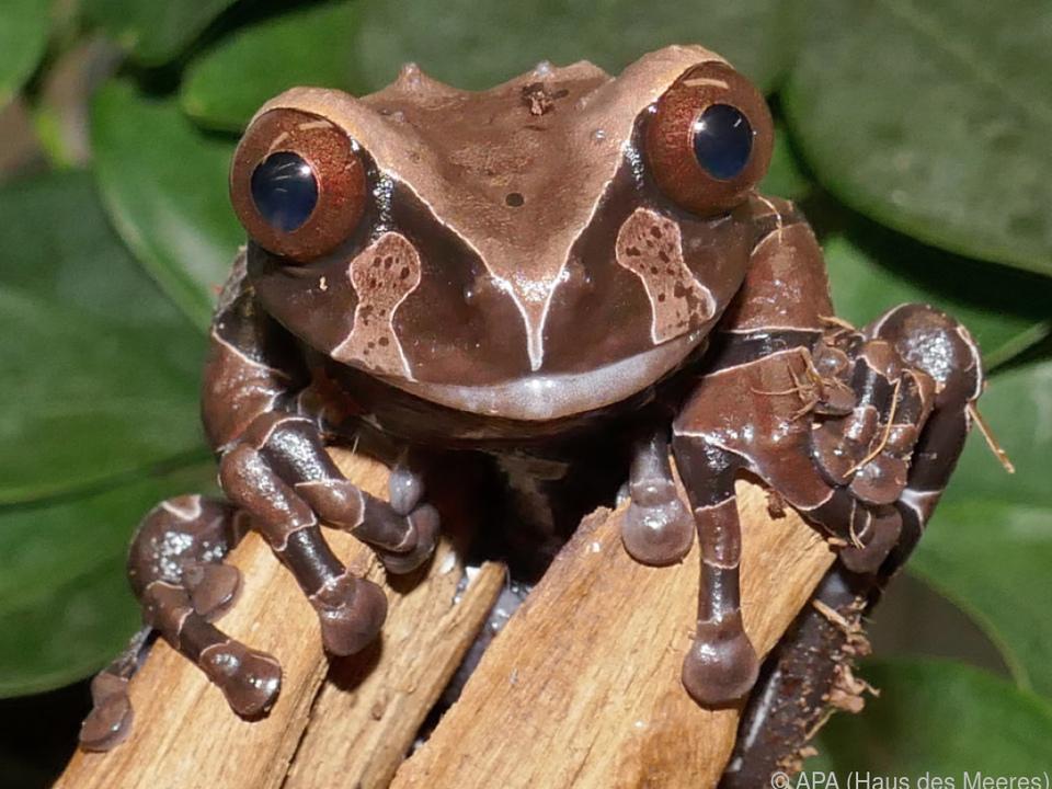 Den Froschkönig gibt es wirklich