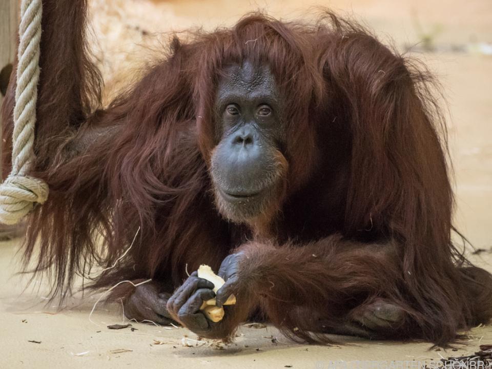 Der Zoo-Liebling litt an einer Nierenschwäche