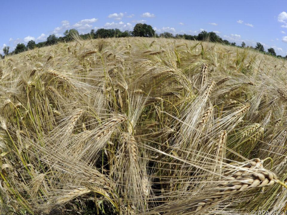 EU-Parlament: Agrarförderung soll nicht gekürzt werden