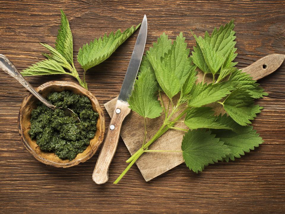 brennessel kochen gericht vitamine gesund sym