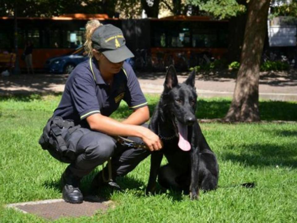 finanzpolizei escot drogenhund