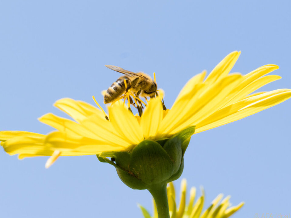 Viele Produkte sind von Insektenbestäubung abhängig