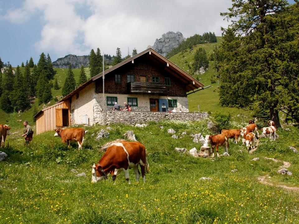 alm wiese kühe landwirtschaft hütte schutzhütte