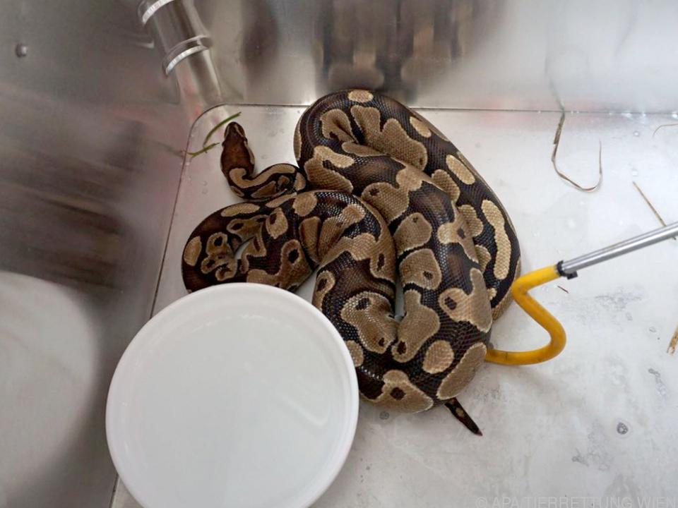 Der Schlange geht es gut