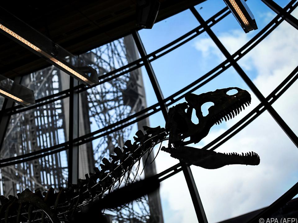 Die Knochen sind mehr als 150 Millionen Jahre alt