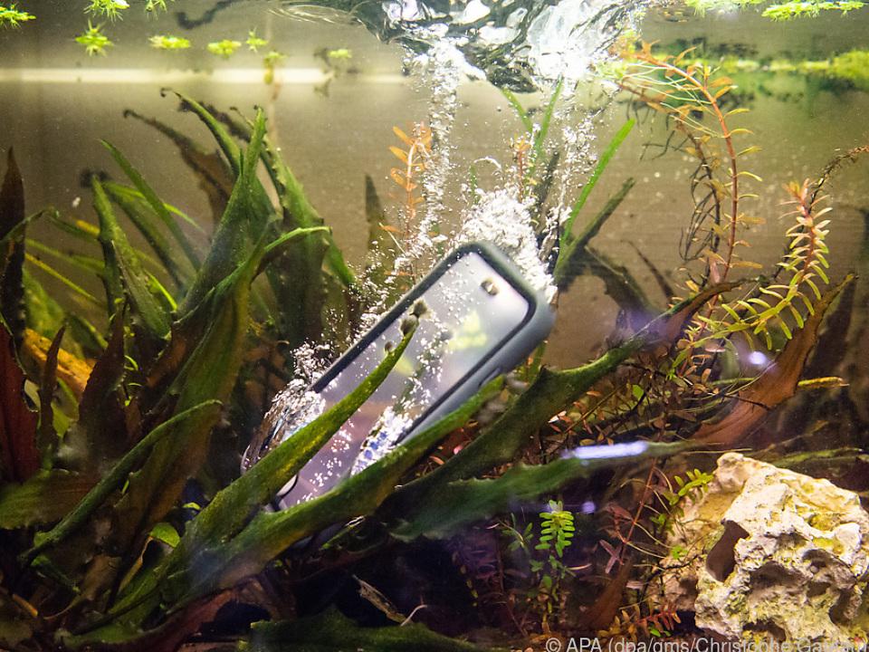 Mit der richtigen wasserdichten Hülle geht sogar ein Bad im Aquarium