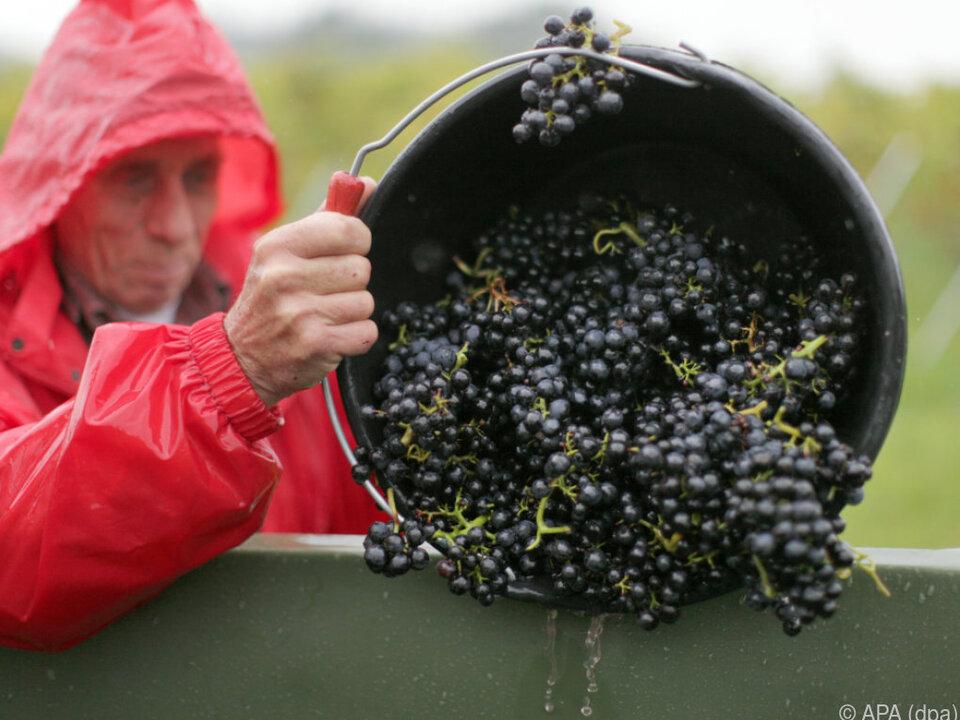 Rotwein und das Burgenland sind in den Köpfen der Menschen vereint