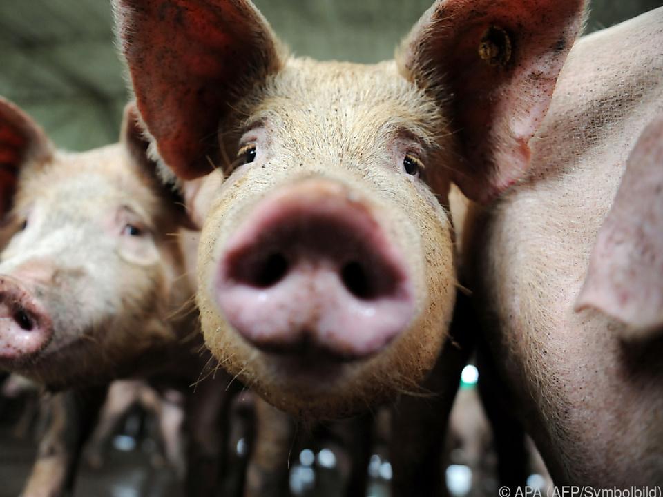 Schweinefleisch wird teurer