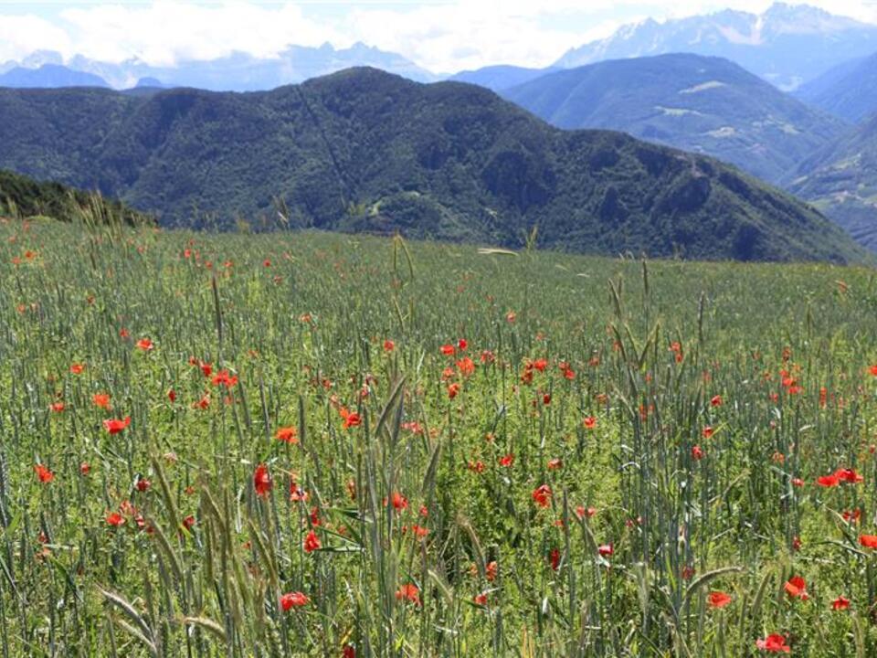 Wiese Blumenwiese Landschaft Berglandschaft Bergbauern Landwirtschaft