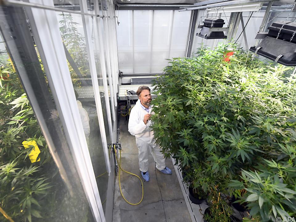Als Cannabis-Produzent würde sich die AGES anbieten