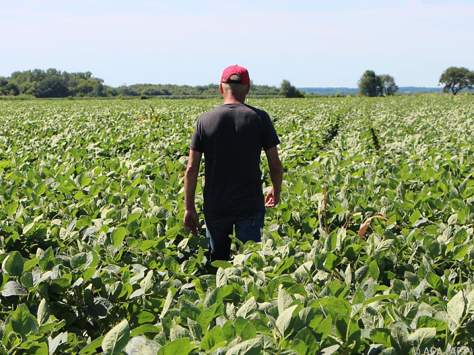 Amerikanische Sojabauern bekommen finanzielle Unterstützung