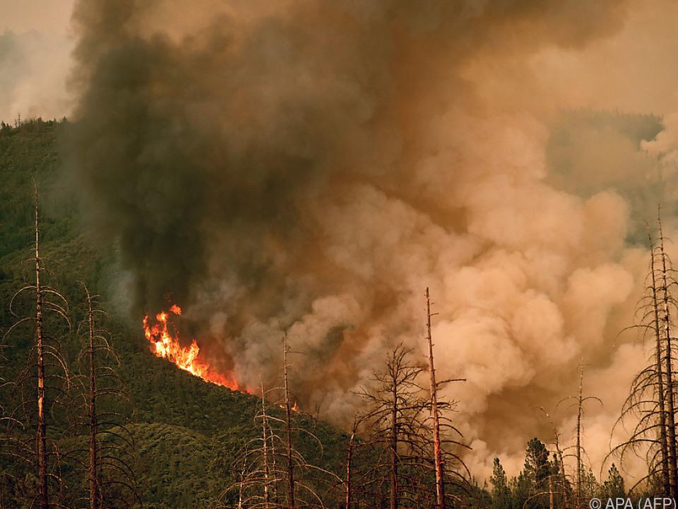 Auch beim berühmten Yosemite Nationalpark brennt es