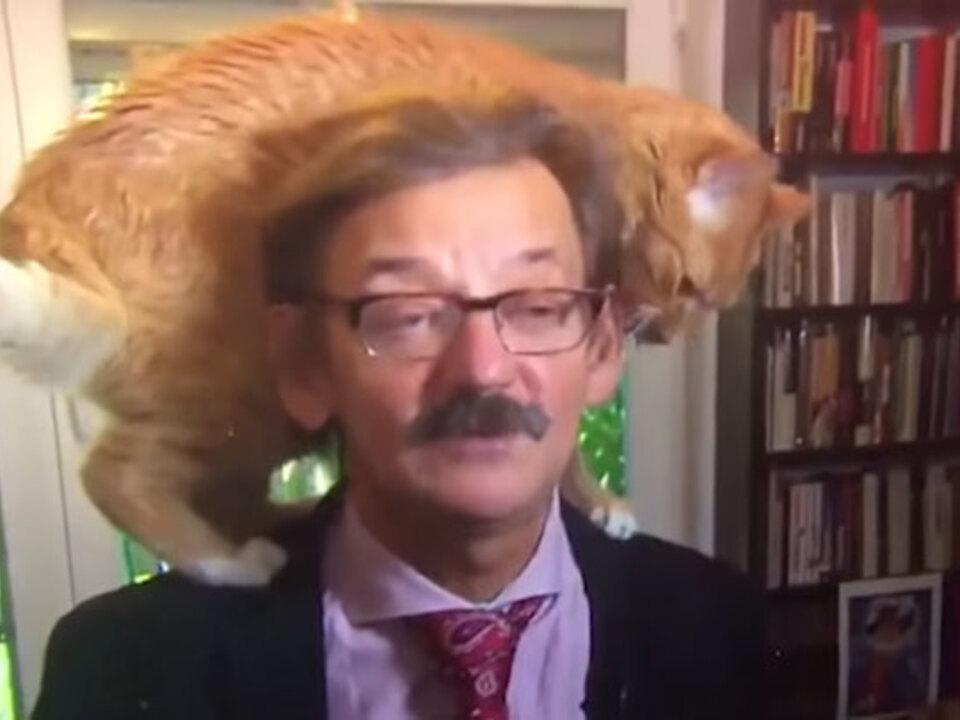 catprofessoryt