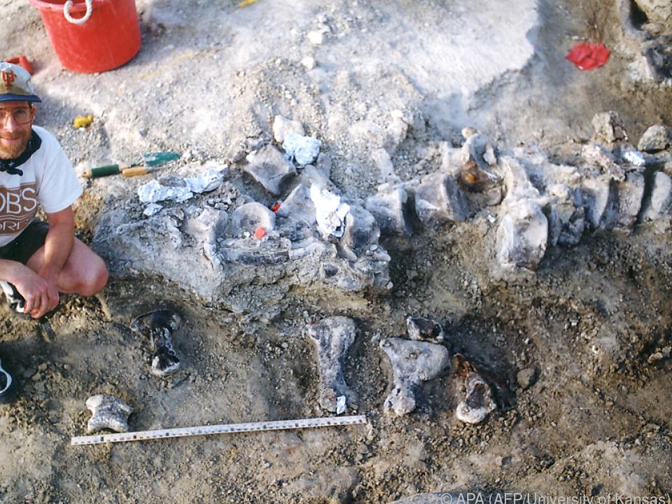 Der Dinosaurierfuß wurde bereits vor 20 Jahren in Wyoming entdeckt