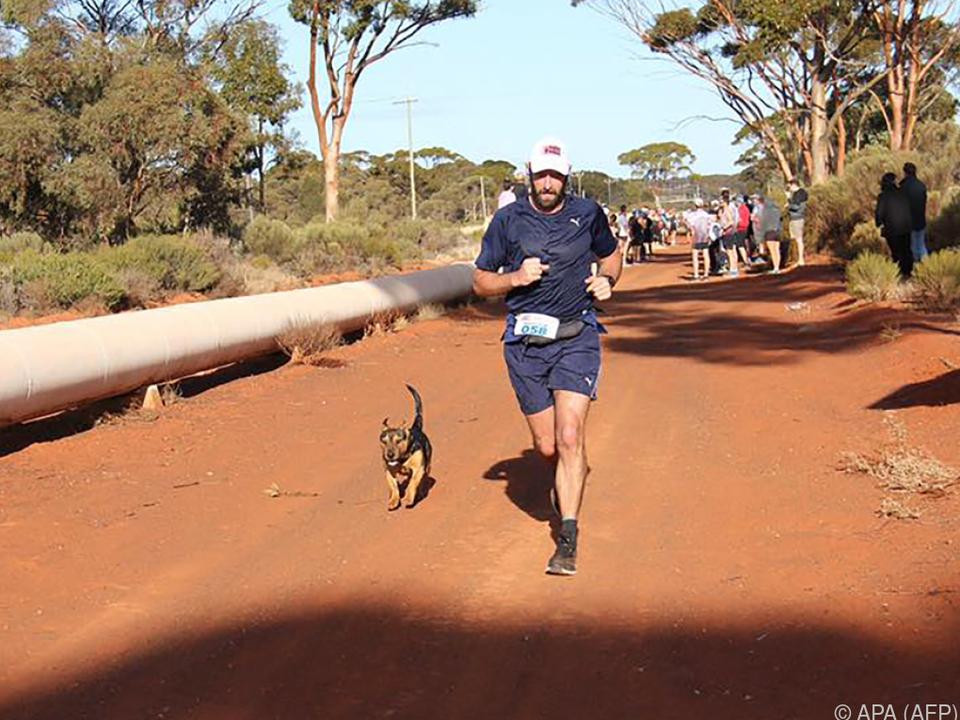 Der Hund Stormy schloss sich den Läufern an