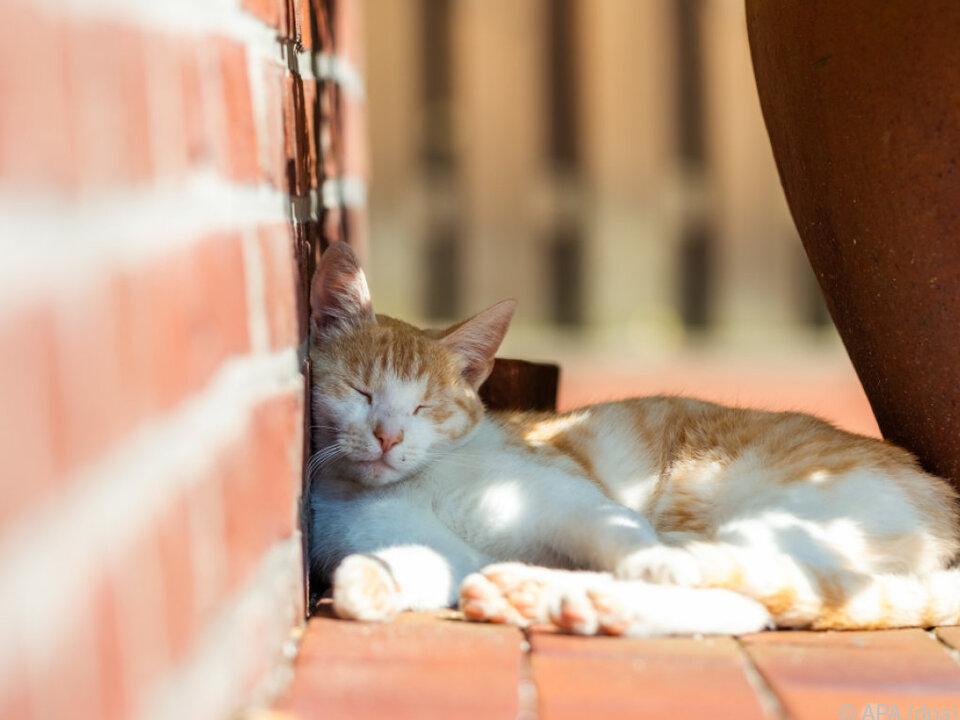 Eine Katze genießt den kühlenden Schatten