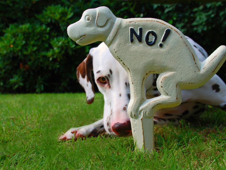 hund häufchen sym