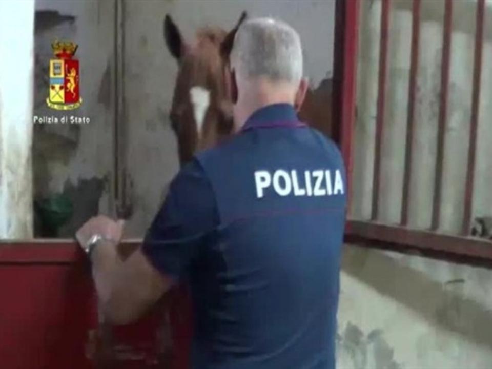Cavallo Polizia di Stato