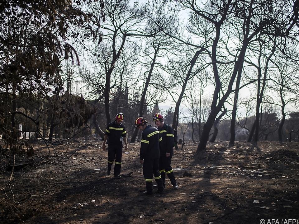 Rettungsteams durchforsten die abgeholzten Wälder