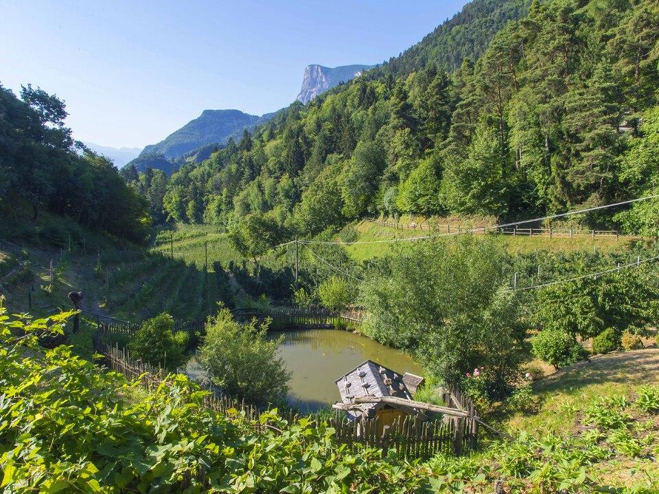 Wiese Natur Teich Garten Wald