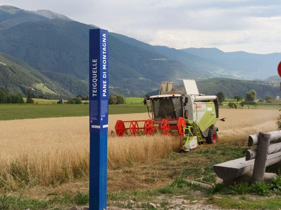 Wissenswerte Fakten zur Landwirtschaft bieten die blauen Lockpfosten, die seit kurzem neben Wiesen, Feldern und Wegen in ganz Südtirol zu finden sind.