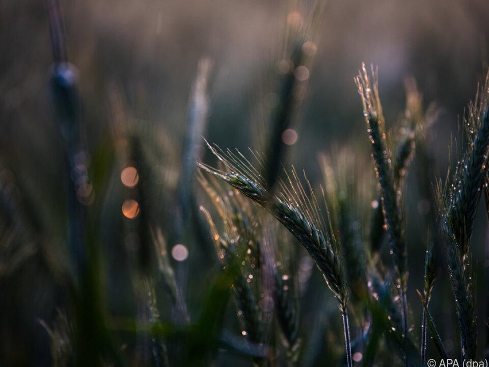 Der Natur würde ein bisschen Regen gut tun
