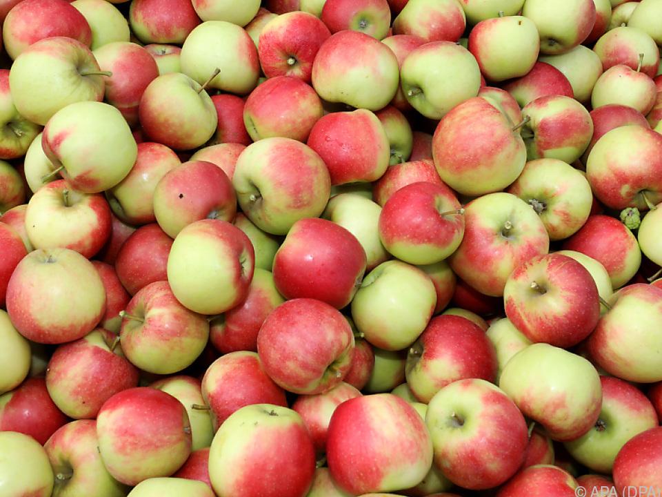 Die Erntemenge liegt heuer 20 Prozent über dem Durchschnittsjahr