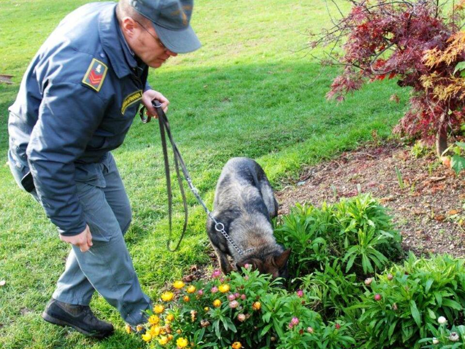 Drogenhund Finanzpolizei Talferwiesen Bozen