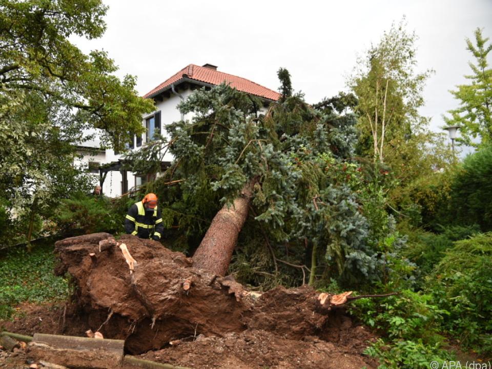 Vor allem umgestürzte Bäume bereiteten Probleme