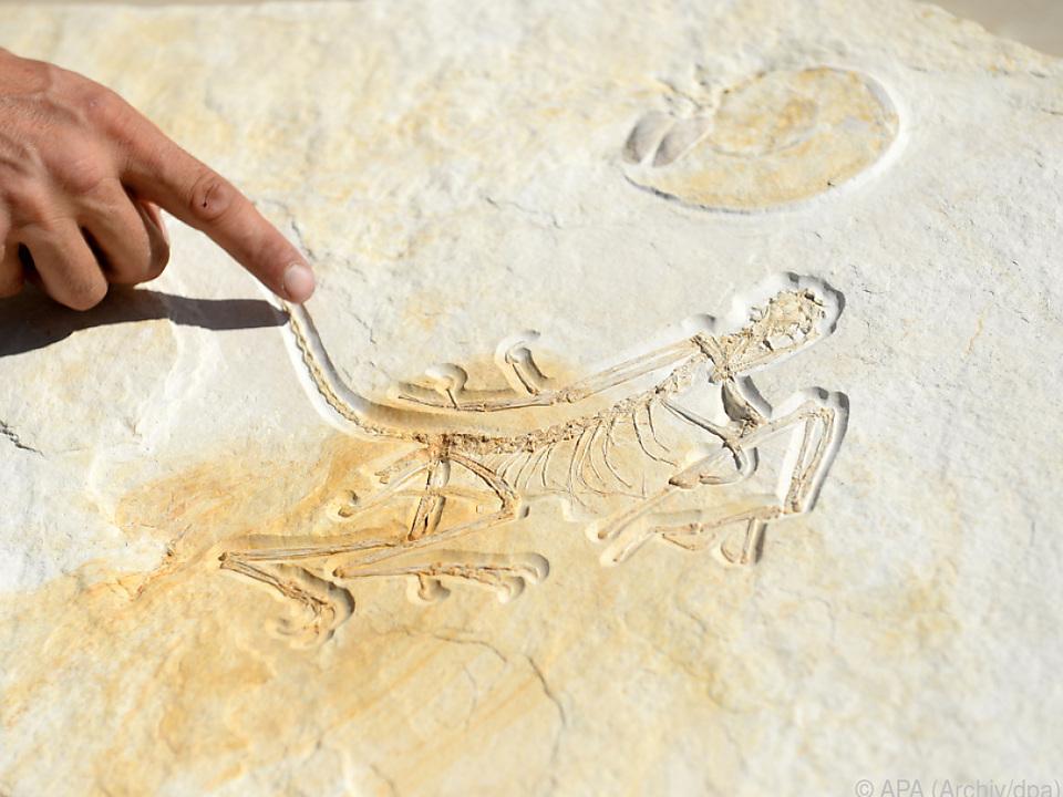 Abdruck eines rund 150 Millionen Jahre alten Urvogels