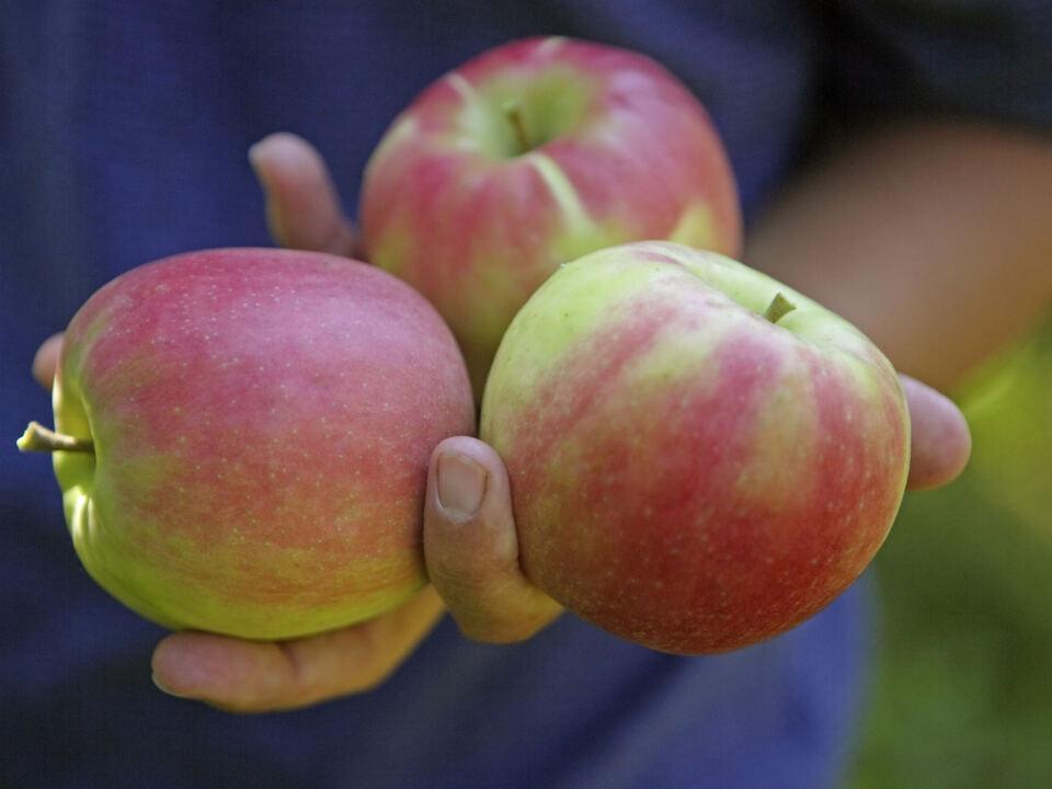 Algunder Bauernmarkt_Äpfel